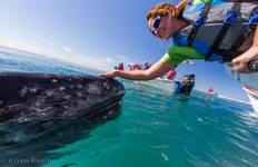 Whale Watching and the Best of Baja Tour
