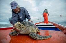 Gray Whale and Sea Turtle Conservation Adventure Tour