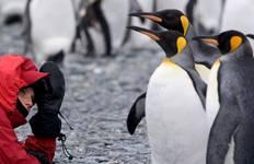 Falklands, South Georgia & Antarctic Islands Tour