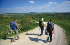 Francigena Way: Siena to Orvieto Tour