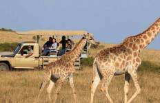 Garden Route and Safari Tour