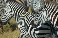 Kenya & Tanzania Overland Tour