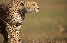 Kenya Camping Safari Tour