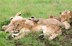 Kenya: A Timeless Safari Tour