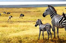Tanzania: The Serengeti & Beyond Tour