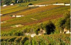 Burgundy Vineyard Escape Tour