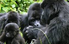 Gorillas to Cape Town Tour