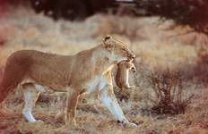 Masai Mara Long Weekend Tour