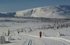 Cross-country Skiing: Venabu Tour
