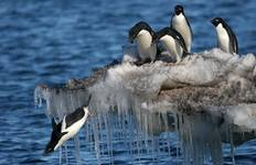 Falklands, South Georgia & Antarctic Circle Crossing Tour