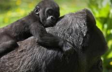 Uganda & Gorillas Overland Tour