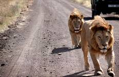 Serengeti Safari to Zanzibar Tour