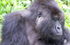 Mountain Gorilla Express Accommodated Tour