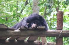Jogjakarta Orangutan & Wildlife Centre - 4 Weeks Tour