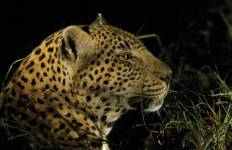 Kruger Experience - Lodge (5 days) Tour