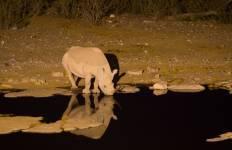 04 Day Etosha & Swakopmund Adventure Safari Tour