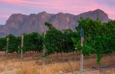 Cape Town and Winelands  Tour