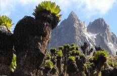 Mt Kenya Batian (Lenana Trek) Tour