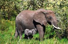 Nairobi To Dar Es Salaam (18 Days) East Africa Family Adventure Tour