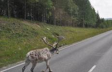 Reindeers and Russians Tour