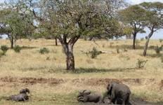 Kenyan Wildlife Safari: Amboseli Tour