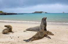 Galapagos Adventure - Northern Islands (Daphne) Tour
