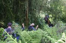 Best of Rwanda Tour