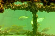 Marine Conservation Cambodia Tour