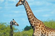 Botswana Adventure Tour
