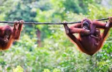 Borneo Adventure Tour