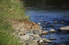 African Bush and Wildlife Experience 4 Weeks Tour