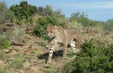 Cheetah and Wildlife Rehabilitation 1 Week Tour