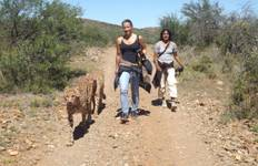 Cheetah and Wildlife Rehabilitation 2 Weeks Tour
