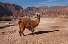 Salta Desert Explorer 5D/4N Tour