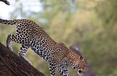 Bamba Safari Adventure 4D/3N (Sweetwaters & Samburu) Tour