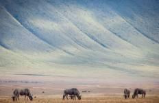 Highlights of Tanzania Safari 4D/3N (Serengeti, Ngorongoro & Lake Manyara) Tour