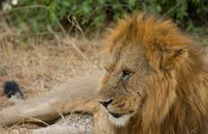 Lakes & Mountain Safari 10D/9N (Masai Mara, Lake Nakuru & Baringo, Samburu, Amboseli) Tour