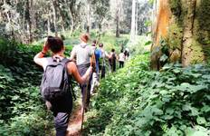 Gorillas & Chimps Safari 5D/4N Tour