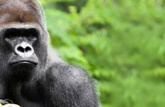 Kenya & Uganda Gorilla Adventure Tour