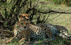 Amboseli and Tsavo Safari Tour