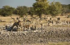 Namibian Highlights Safari 6D/5N Tour