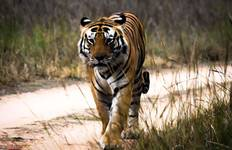 Pench Tiger Experience 3D/2N Tour