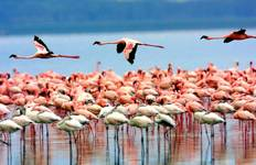 Kenya & Tanzania 4WD Safari Adventure 12D/11N Tour