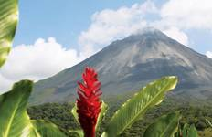 Monkeys Jungles and Volcanoes Summer Tour