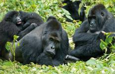 Gorilla Trek and Tanzania - 25 days Tour