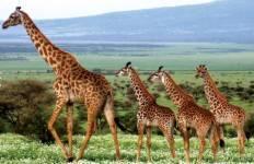Zanzibar to Vic Falls Tour