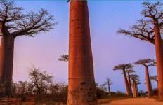 Madagascar Baobab Tree Trail Tour