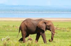 Tanzania Private Safari with Zanzibar – Stone Town & Beach Stay Tour