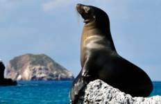 Galápagos Highlights & Peru with Peru\'s Amazon Tour