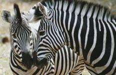 Wild Botswana Tour